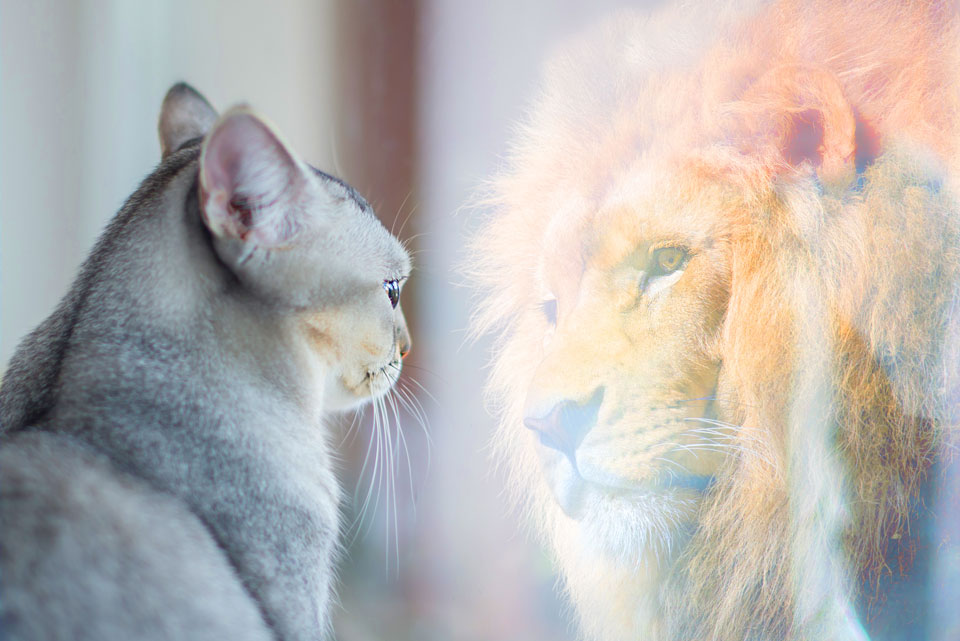 Cat to Lion. Reflecting. Paul Claireaux